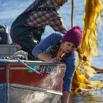 Harvesting kelp